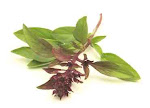Thai Basil