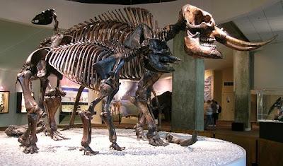 Mastodon skeletons in museum