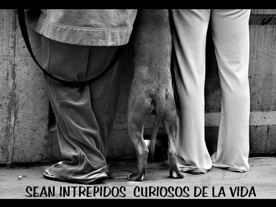 Seamos más perros...