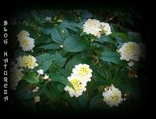 Do meu jardim 6