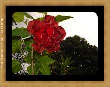 Do meu jardim 7