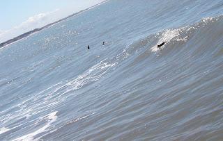 Surf in Argentina