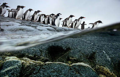 Animal Great Migration | National  Geographic | Foto national geographic Seen On www.coolpicturegallery.us