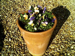 yorkshire flower
