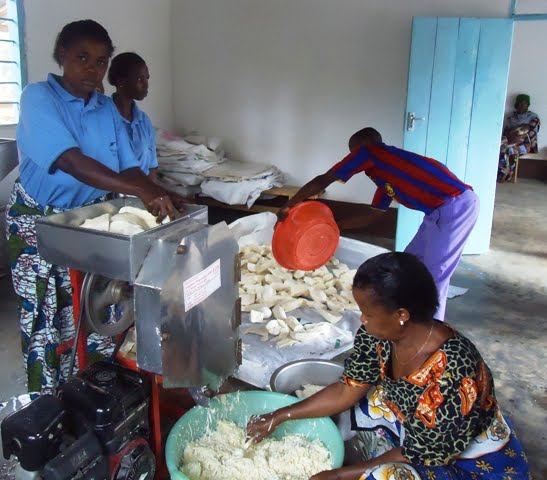 Farming Uk Meat Processing News: IITA News And Updates: Return Of The Cassava: New Ways Of