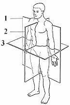 Creating a Body Planes & Directions Sheet (Jan 25, 2012) - Human ...