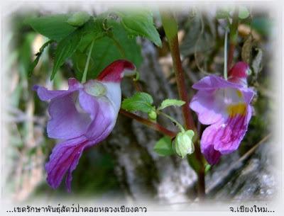 زهور الببغاء سبحان الله (الفريق