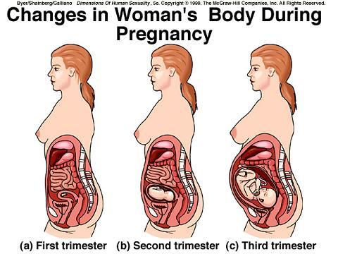 diagram of pregnant womans body 12 10 depo aqua de u2022 rh 12 10 depo aqua de