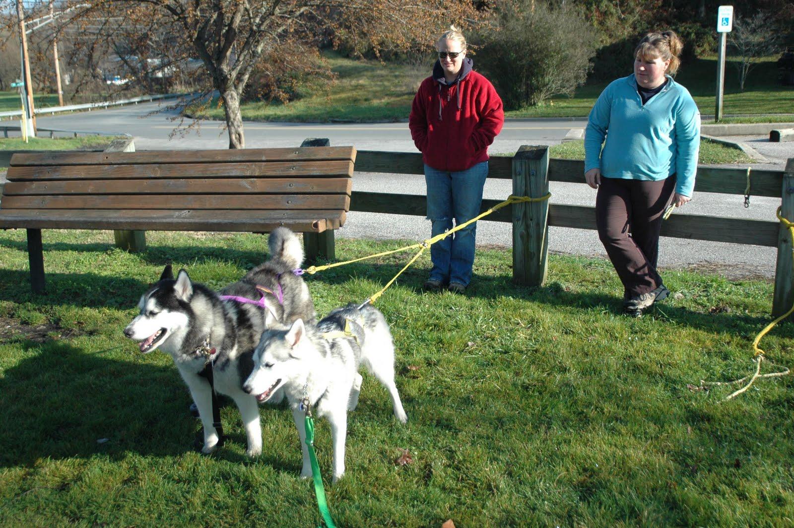 Paramount Dog Training Llc
