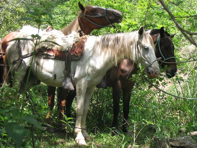 [Horseback+Riding+042.jpg]
