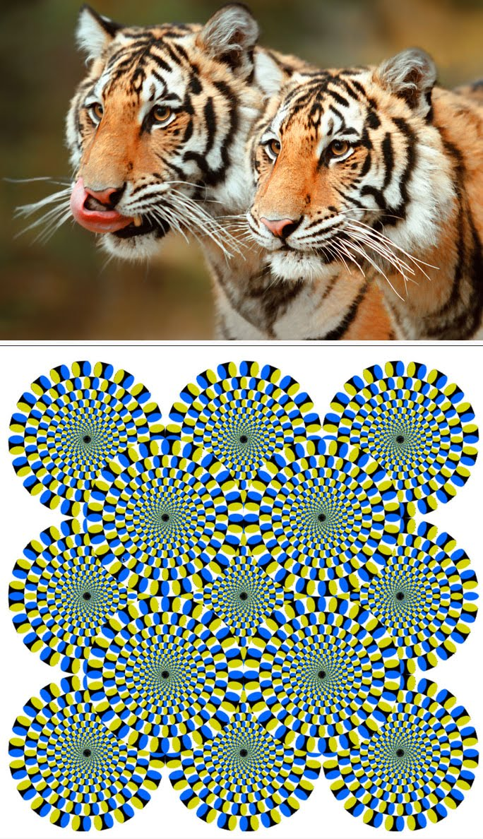 [illusion.jpg]