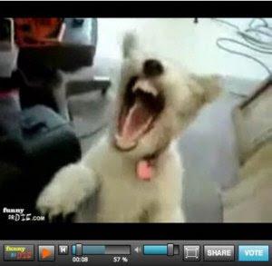 Melhores vídeos da internet