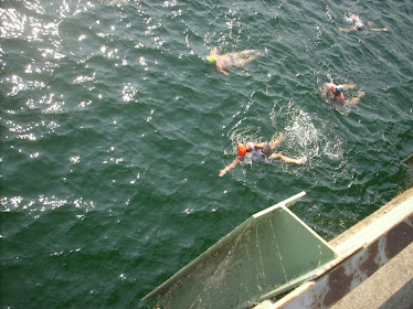 2010 Long Bridge Swim