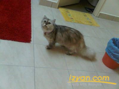 kucing parsi Fasha Sandha Tag Archive for kucing-parsi-