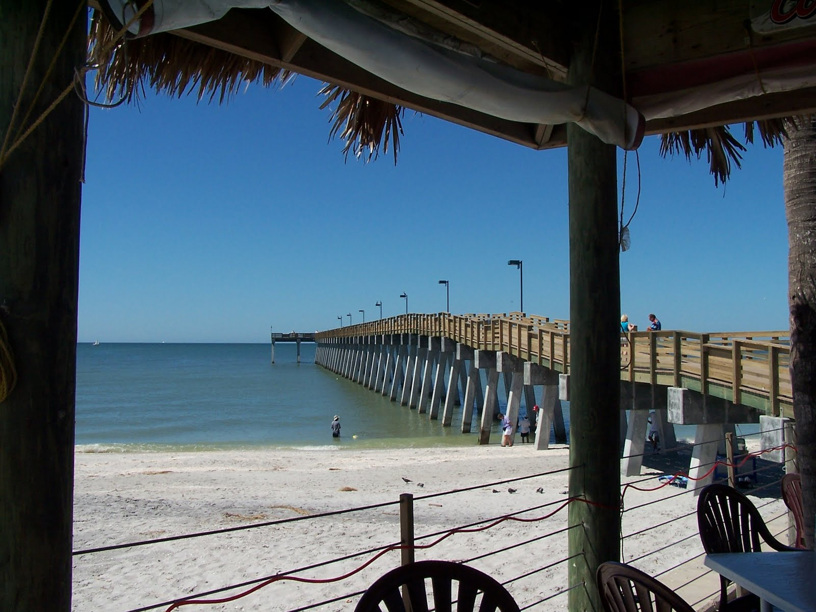 venice florida daily photo venice fl fishing pier