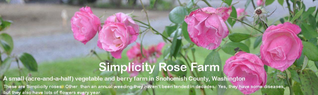 Simplicity Rose Farm