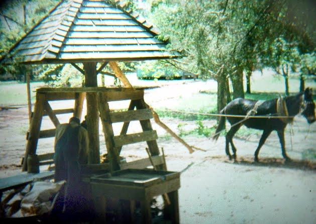 [mule2.jpg]