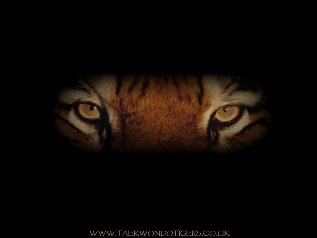 http://3.bp.blogspot.com/_cVJ7C1VF3WM/TNCS-5cQaKI/AAAAAAAAANk/iMhxrc-tJxw/s1600/Tigers_Wallpaper_1_1024x768.jpg