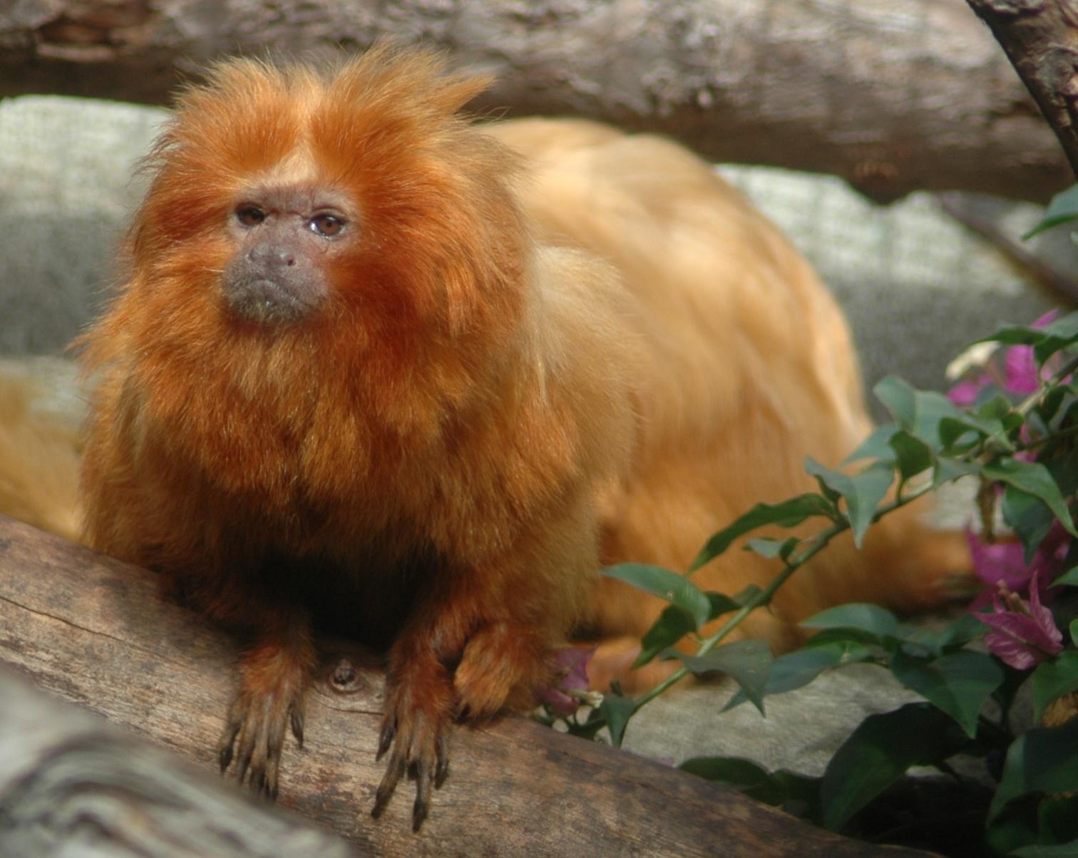 rarest animals in the - photo #41