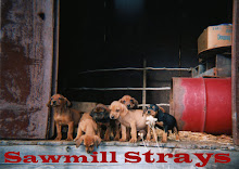 Save The Sawmill Strays