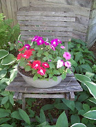 IMPATIENS
