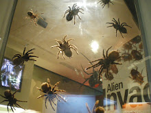 Tarantules.......en espérant ne pas les croiser sous la douche!