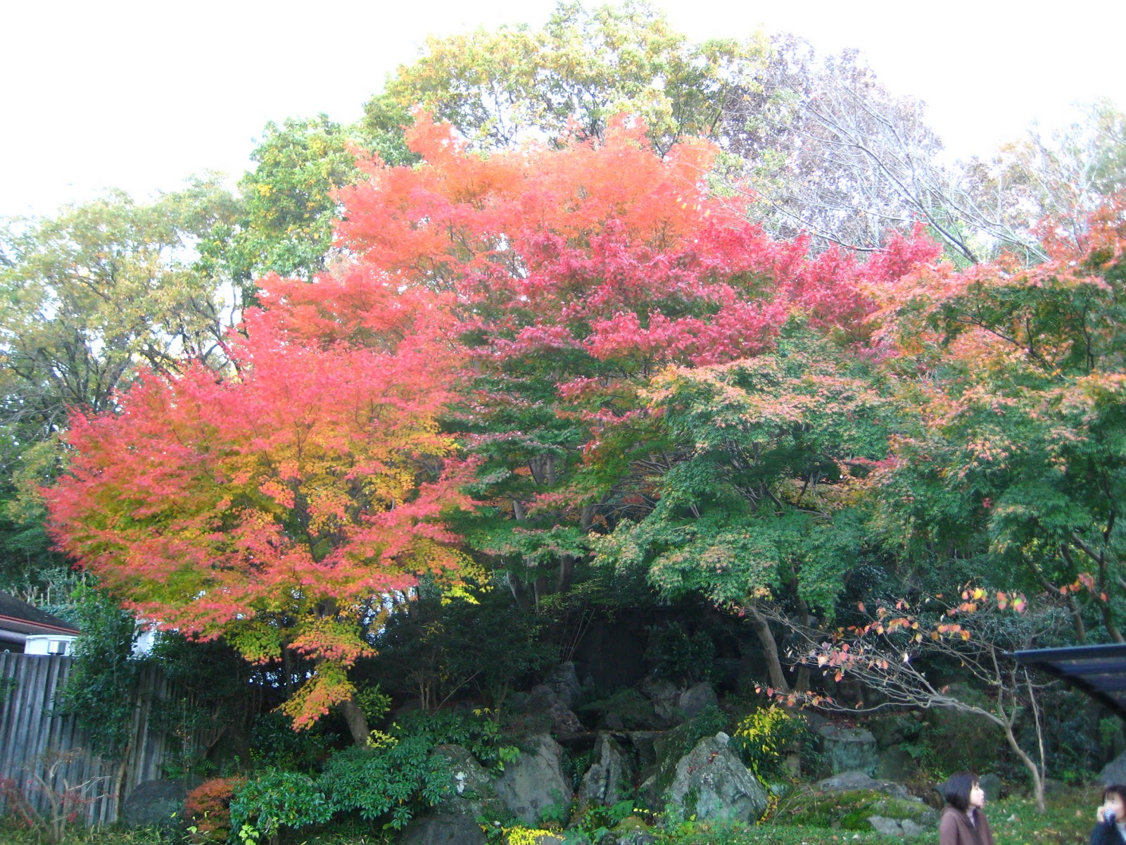 Victoria In Japan Land: Higashiyama Zoo & Botanical Gardens