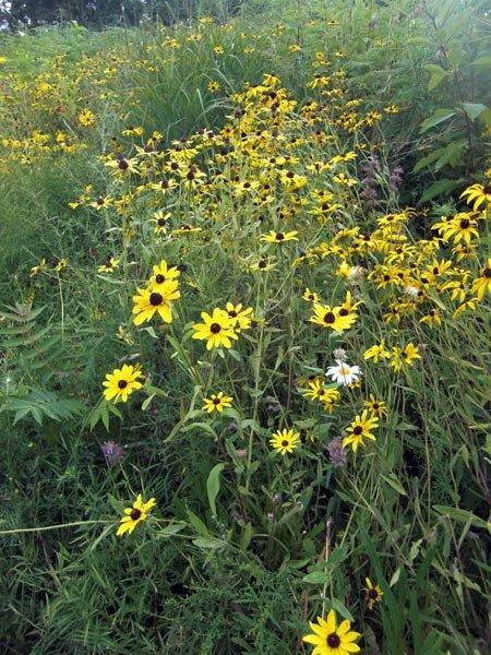 [sunflowers.jpg]