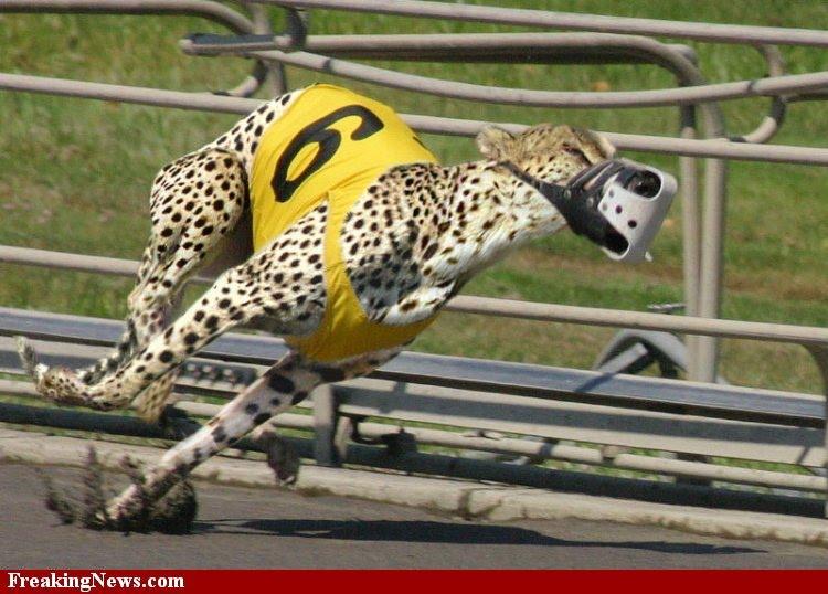 Fast Track Dog Training