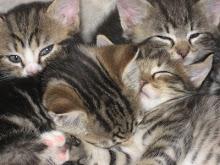 Mina katter som små