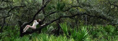 D20 5075 Swamp Cat