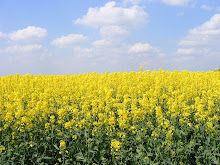 Fields of 'sunshine'