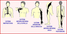 Cadeias musculares segundo Souchard