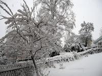 Schneebedeckte Pflanzen