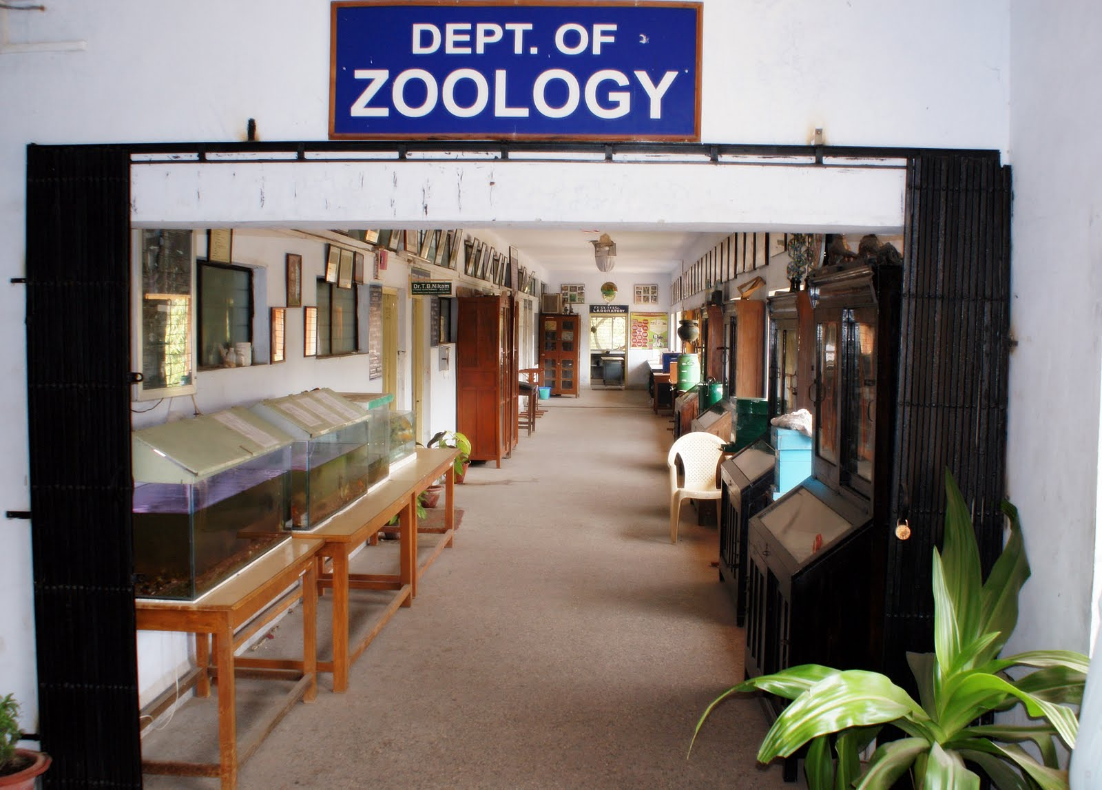 Zoology samples of research work