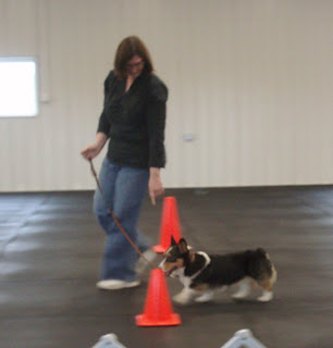 Do Apdt Dog Trainers Use All  Quadrants Operant Training