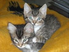 Garden Farms Feral Cat Project Update