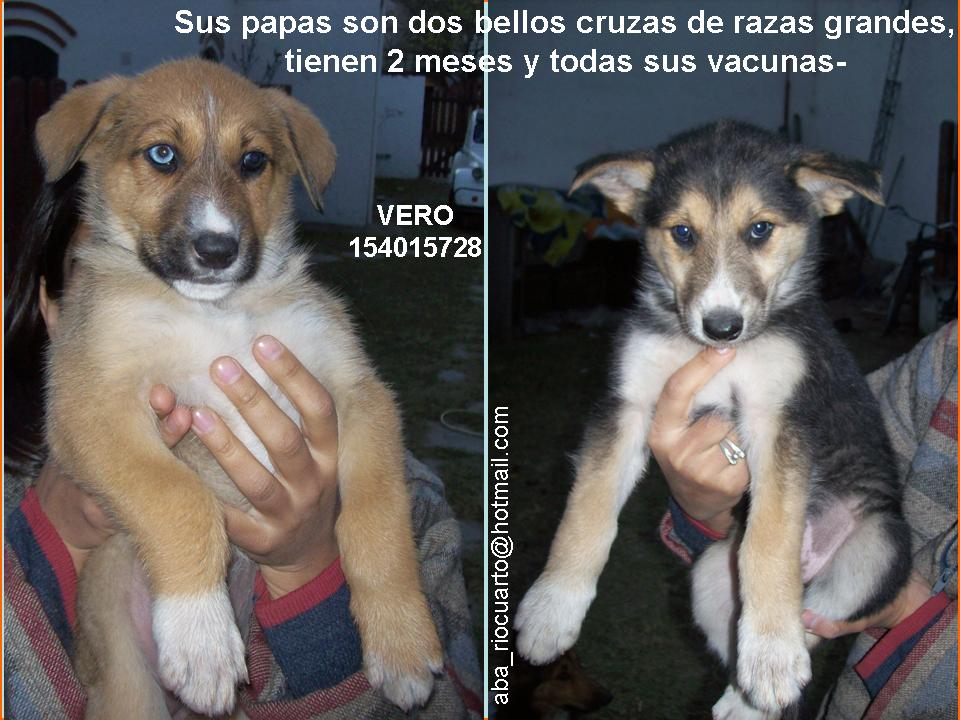 Imagenes De Amor De Perros - Imagenes de perritos tiernos para descargar Imagenes de