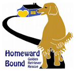 Homeward Bound Golden Retriever Rescue