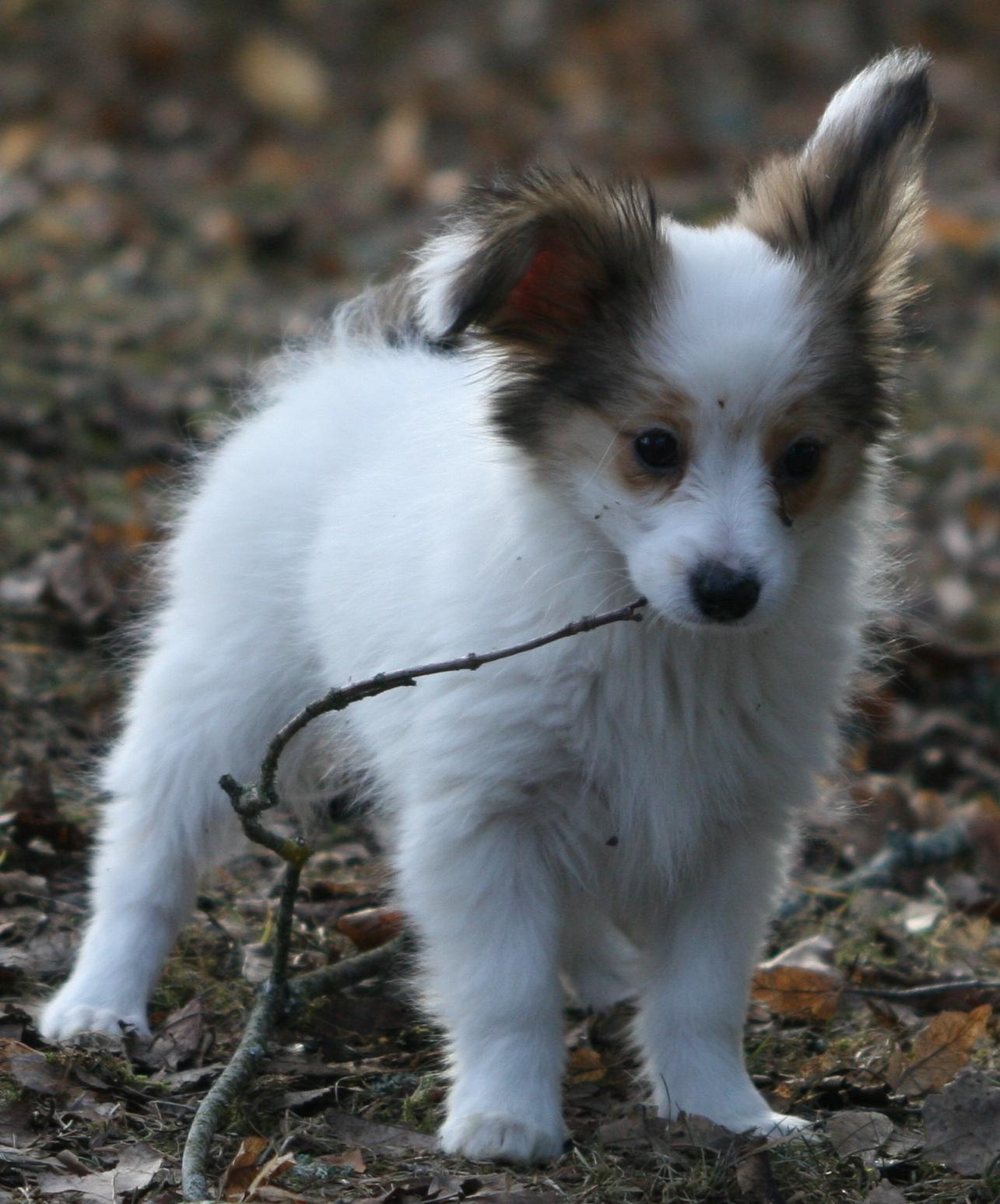 http://3.bp.blogspot.com/_ckAenfEla6I/S-CSQ6p9MmI/AAAAAAAAAqk/t9mHXNZncEs/s1600/puppy.JPG