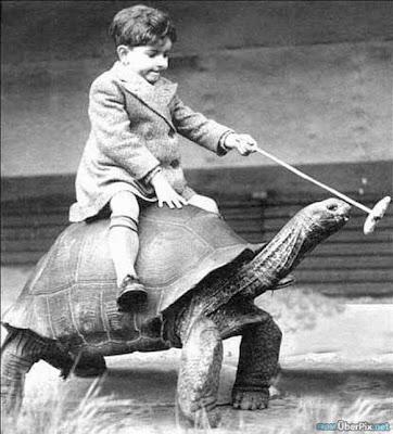 http://3.bp.blogspot.com/_ckBlasgNSzg/S3TB5pHSRnI/AAAAAAAARXM/0RGYMSHLsAw/s400/Boy+Riding+A+Turtle.jpg