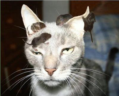 http://3.bp.blogspot.com/_ckBlasgNSzg/SeYZlbtx3kI/AAAAAAAAL7M/FUpuz2HMgzg/s400/Cat+And+Mouse.jpg