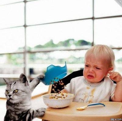 Naughty+Cat.jpg
