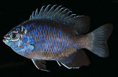 9 Spesies Baru di Papua Nugini