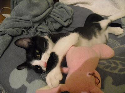 gatito soy un gato