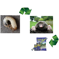 Vegetable Gardening With Mike The Gardener Grubs Lead To Moles How To Get Rid Of Both Of Them
