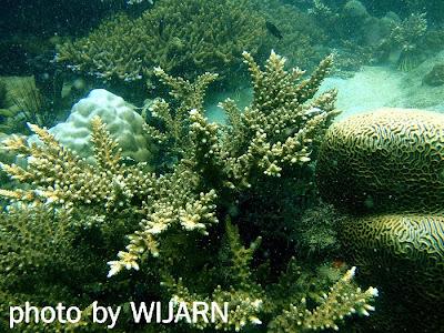 ประการัง