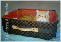 Perezo en la maleta