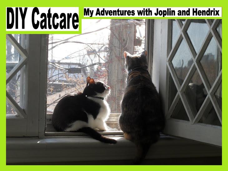 DIY Catcare