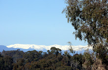 View to Australia's highest mountains from Tumbarumba